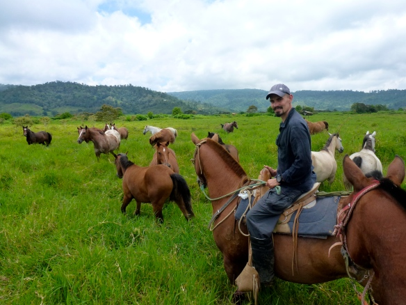 Eine Gruppe mit ca. 20 Pferden.