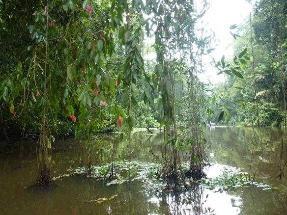 Der Kanal durch den Dschungel.