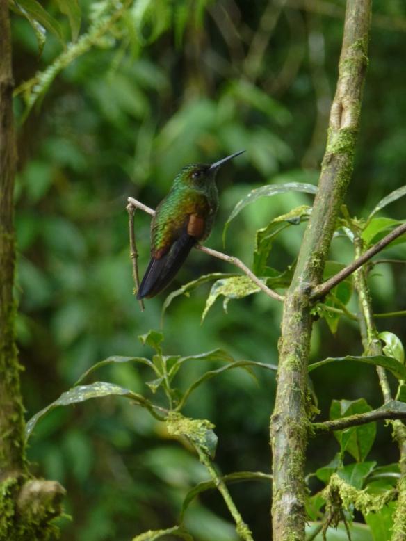 Kolibris gibt es hier, so wie bei uns Spatzen.